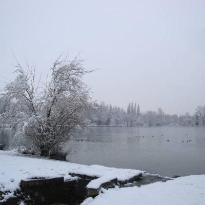 Gambettes sous la neige